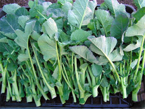 幻の野菜 のらぼう菜